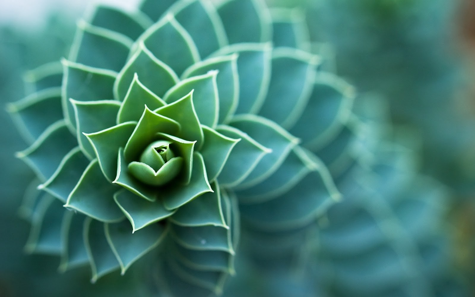 Biomimicry in the Built Environment Image